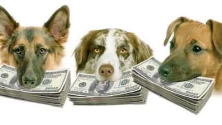 Dogs_Money